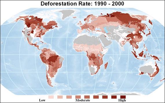 global deforestation