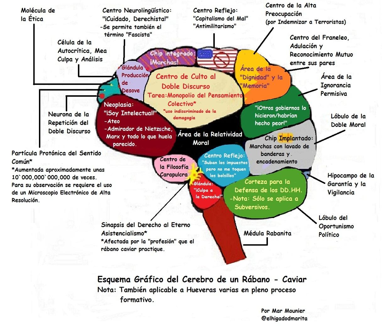 Dorable Partes Del Diagrama De Cerebro Modelo - Imágenes de Anatomía ...