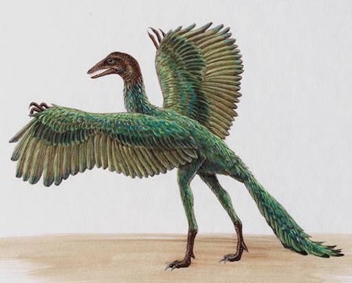 http://4.bp.blogspot.com/-ish0-WoZB2M/T9yZH_EttdI/AAAAAAAAAXI/HOV58i881CY/s1600/archaeopteryx%5B1%5D.jpg
