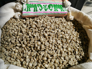 Arabica Yoddoi Doichhang Green Coffee Beans.