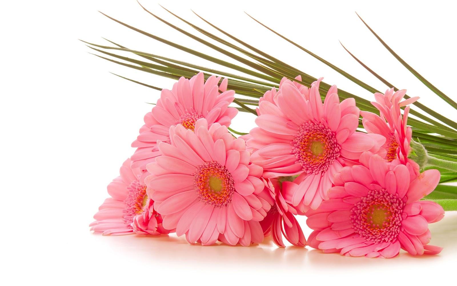 tulpen achtergrond met een - photo #37
