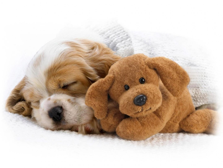 http://4.bp.blogspot.com/-itXvO_nVl2o/Toch8QiGyTI/AAAAAAAADOM/zLZzVyncnCA/s1600/puppy.jpg