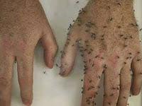 Cara Mudah Membuat Anti Nyamuk Paling Ampuh