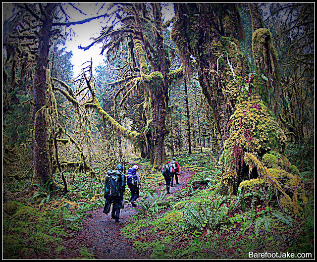 backpacking hoh rain
