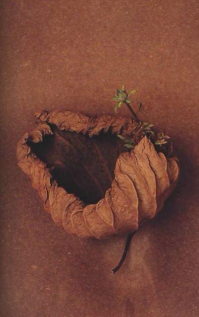 Quelle merveille !!!!! Toshiro%2BKawase-ikebana-lotus