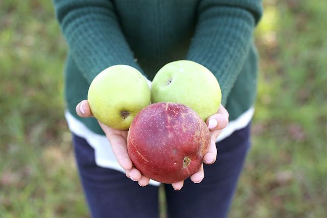 apple-picking-orchard-nc
