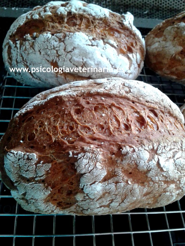 Pan de verdad, fácil y rico, rico