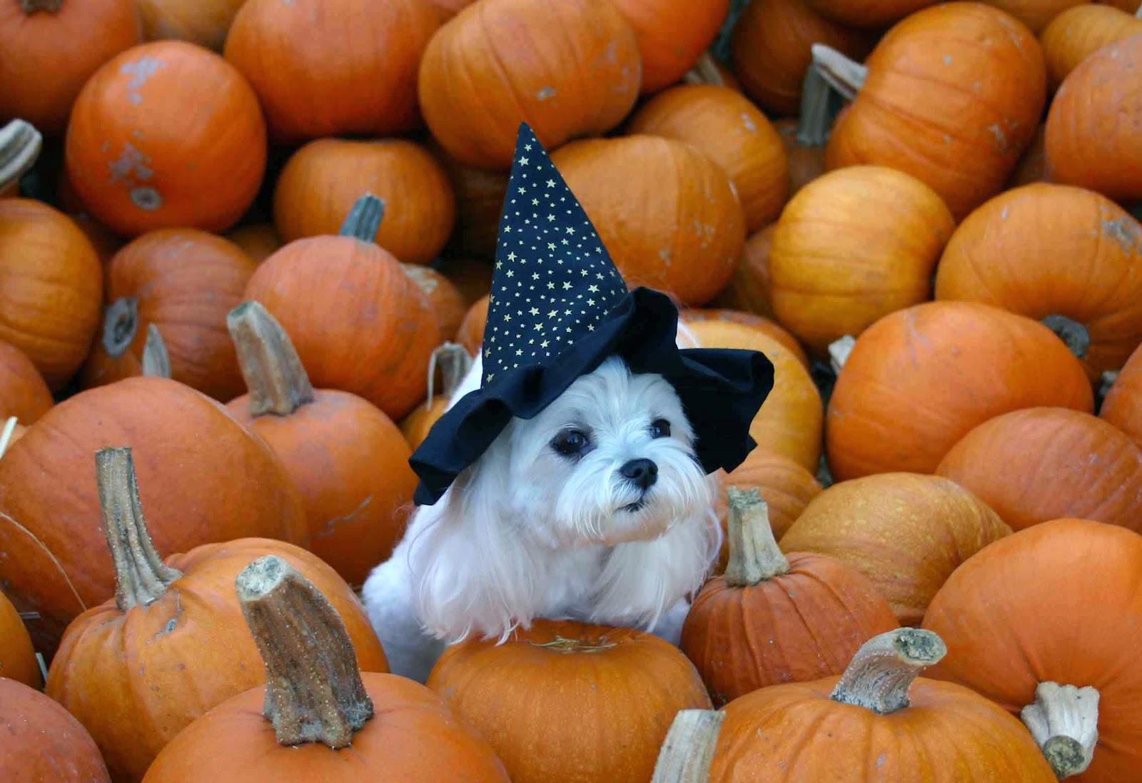 Funny halloween animals 3