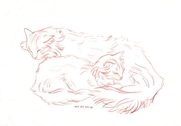 набросок кошек