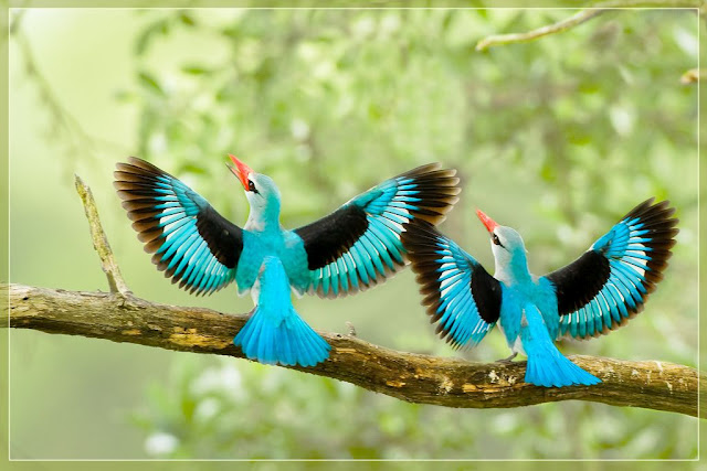Beauty Secrets and Health Tips: Worlds Most Beautiful Birds