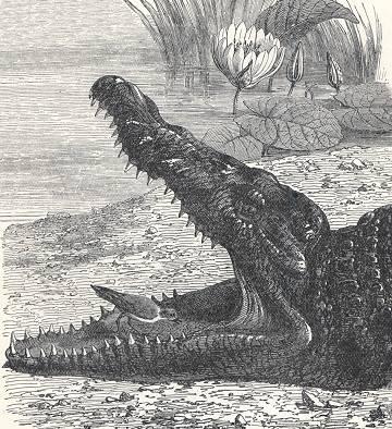 nile crocodile and bird symbiotic relationship worksheet