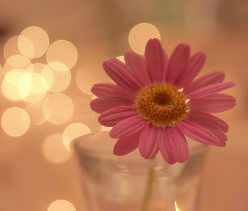 Giro Pelo Mundo: Flores Tumblr