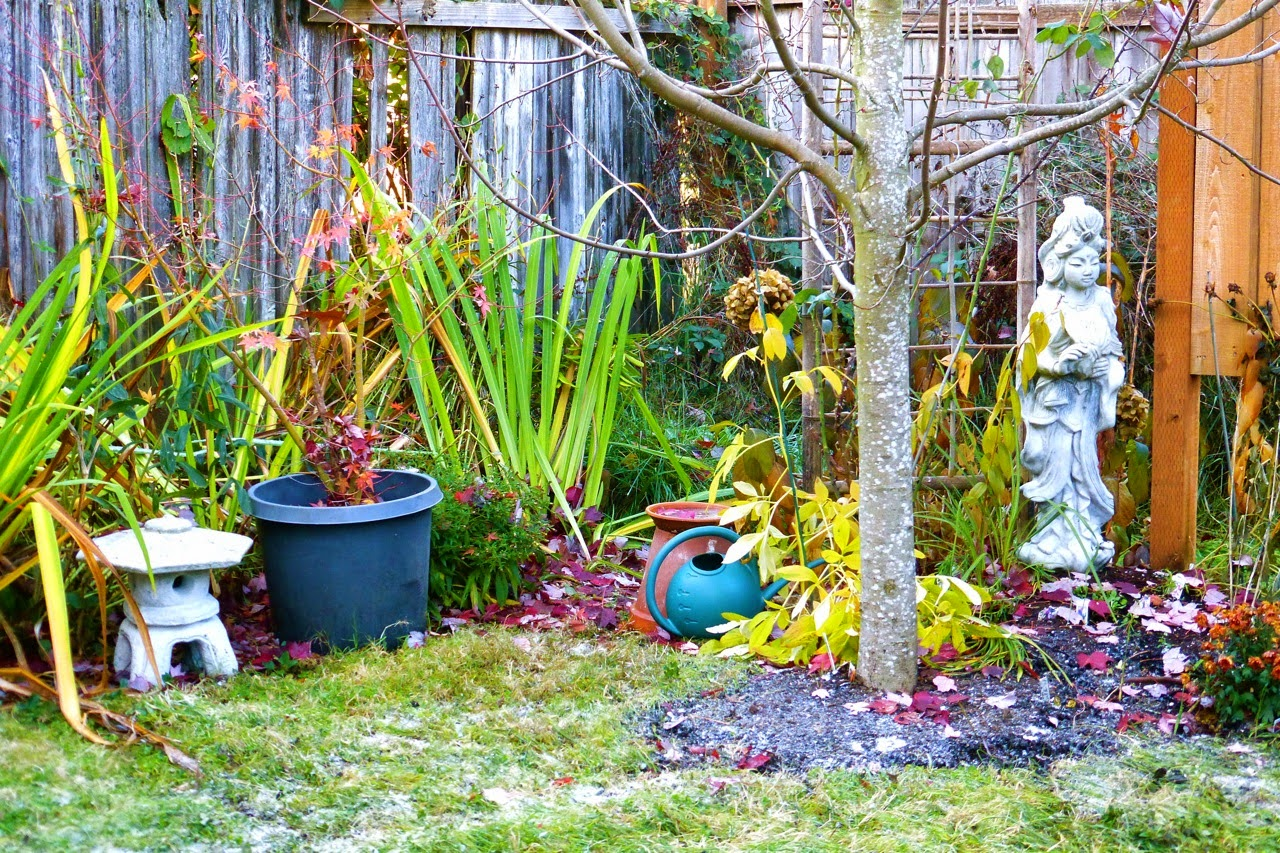 Eugene, oregon, garden, quan yin, stone temple lantern, japanese maple, fall