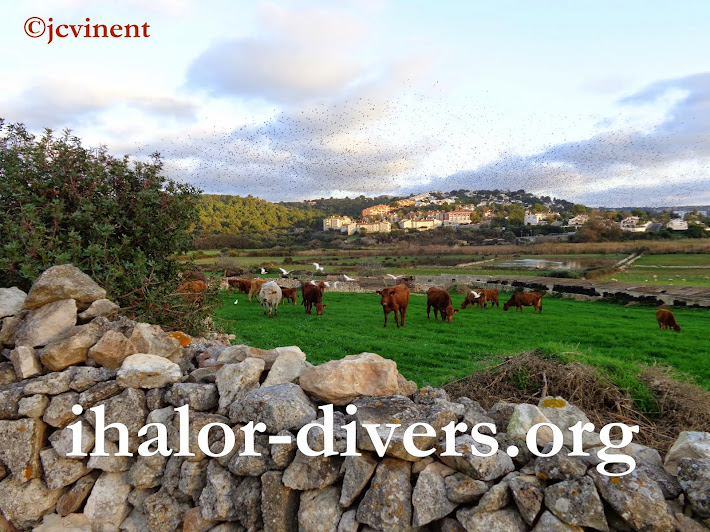 ihalor-divers.org [Alaior/Ihalor,MENORCA]