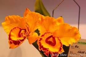 Colección de Fotografías de Orquídeas - Taiwan International Orchid Show (TIOS 2011)  44 fotos