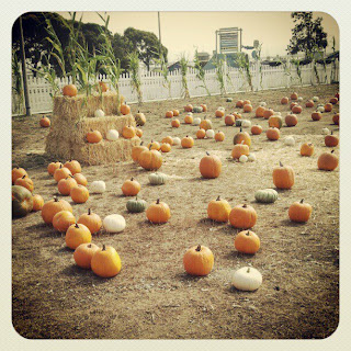 Harbor Village Pumpkin Patch