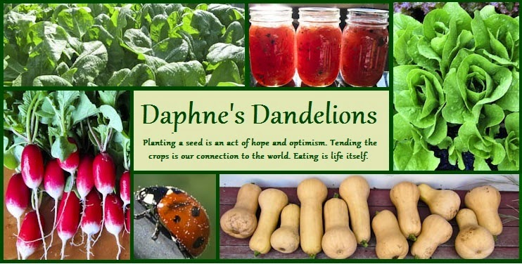Daphne's Dandelions