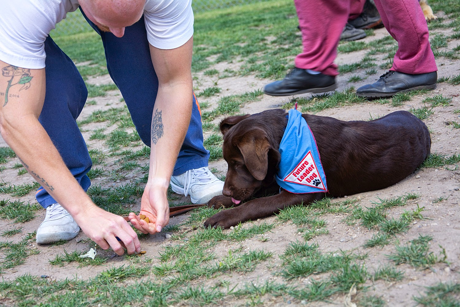 A man dressed in prison blue pants and a white t-shirt is bending over placing bits of kibble on the grass in front of a young chocolate lab. The lab is lying down facing the left and wearing the blue Future Leader Dog bandana. The puppy is looking intently at the kibble with his tongue just coming out. There are legs of another man in the background, wearing maroon sweat pants.