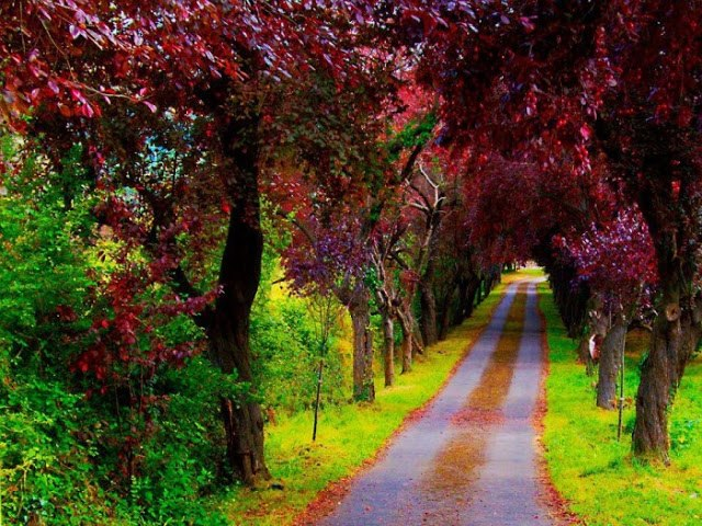 A Beautiful Path Villaviciosa Asturias in Spain