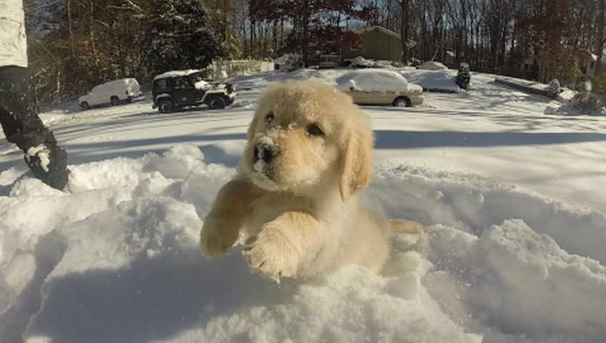 Cute dogs - part 4 (50 pics), dog pictures, puppy playing in snow
