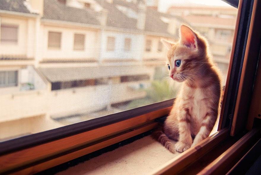 gambar anak kucing comel menunggu kepulangan tuannya di tingkap rumah