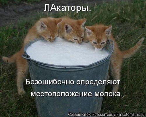 Веселая котоматрица (14 фото)