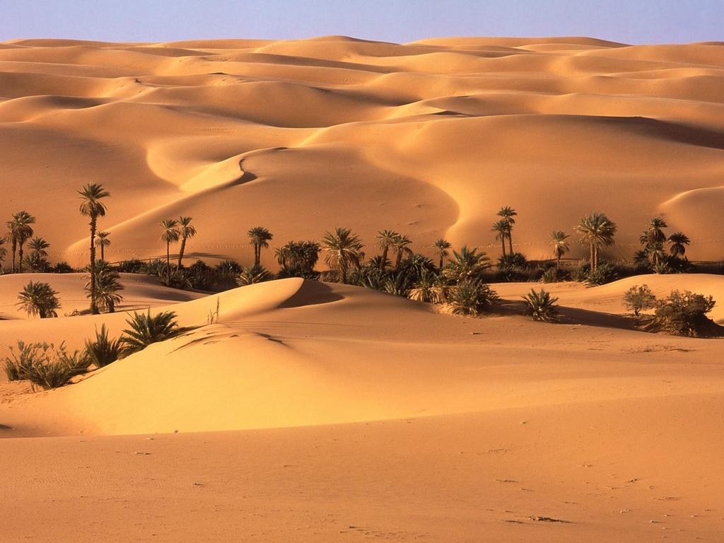 La plaga humana Oasis_en_el_desierto