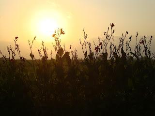 Sunset behind flowers - Tarragona