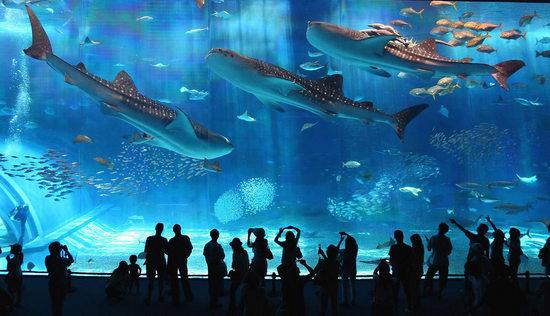 Melancong percuma ke Osaka Jepun bersama Sahajidah Hai-O Marketing melawat akuarium di Osaka