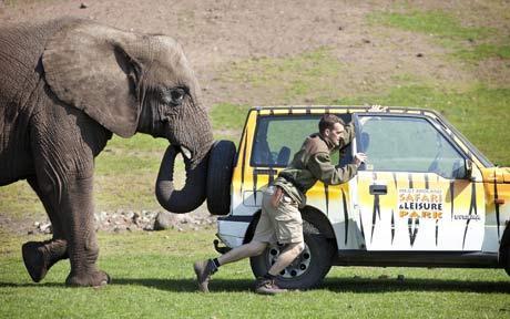 Elephant Helping