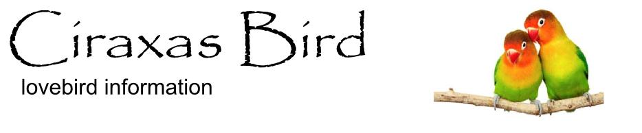 lovebird breeder