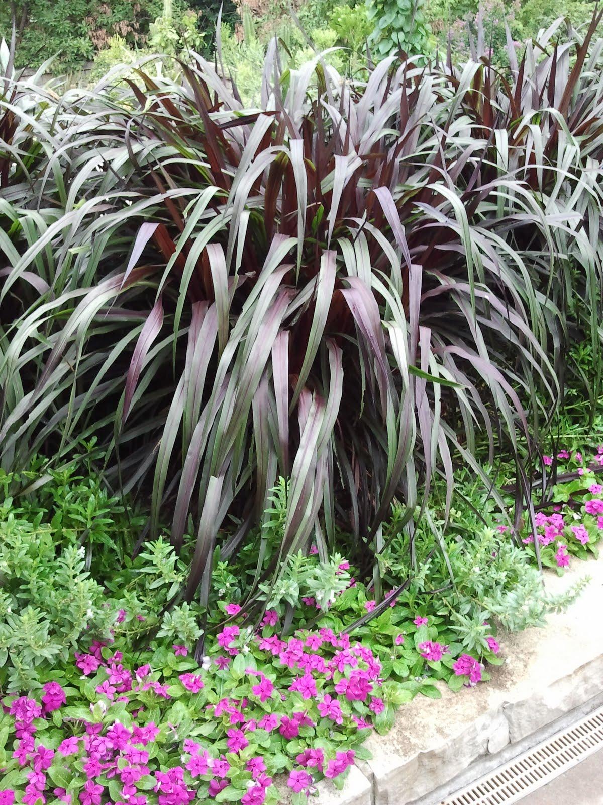 Powell gardens 39 blog august 2011 for Fountain grass garden