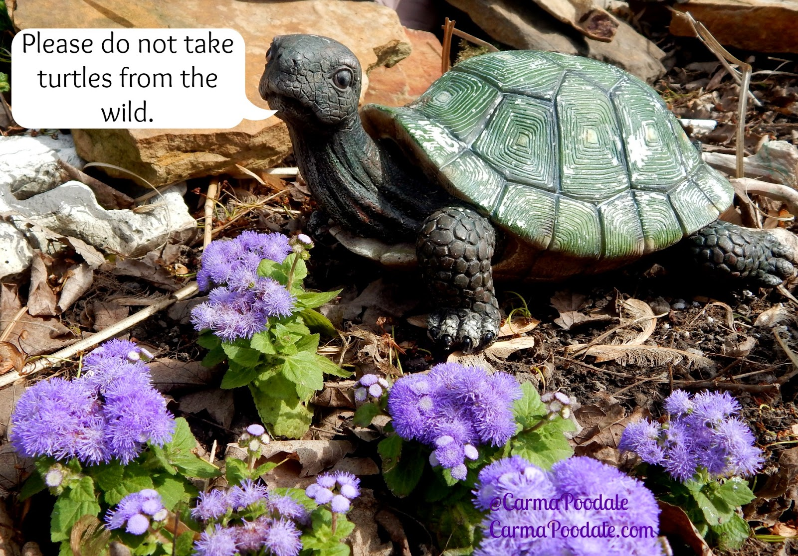 Y Wont My Turtle Eat Carma Poodale : World ...
