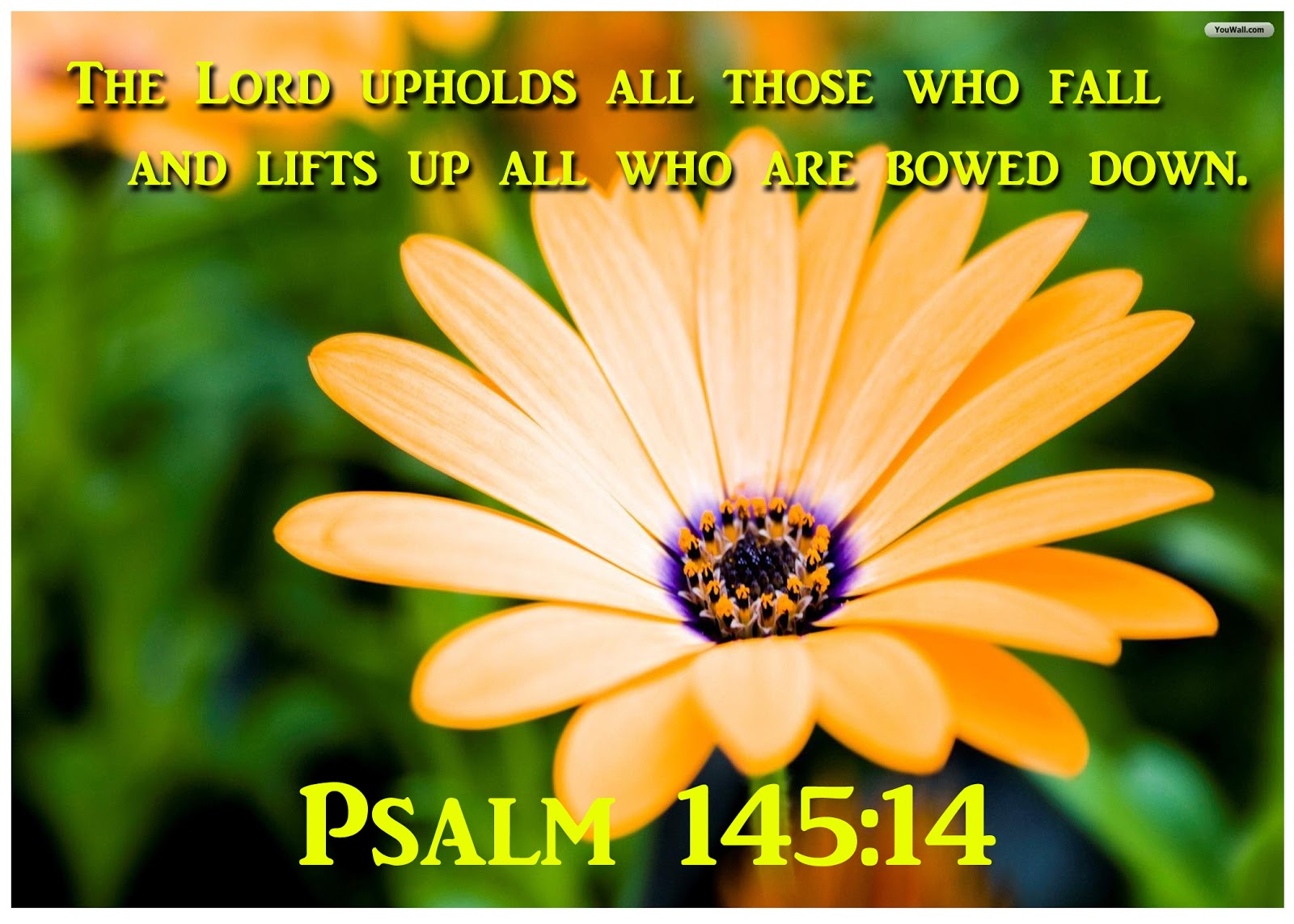 psalm 145 Sermonaudiocom - psalm 145 sermons  the paperback bible presents the bible by the book and is designed to be portable, readable, and.