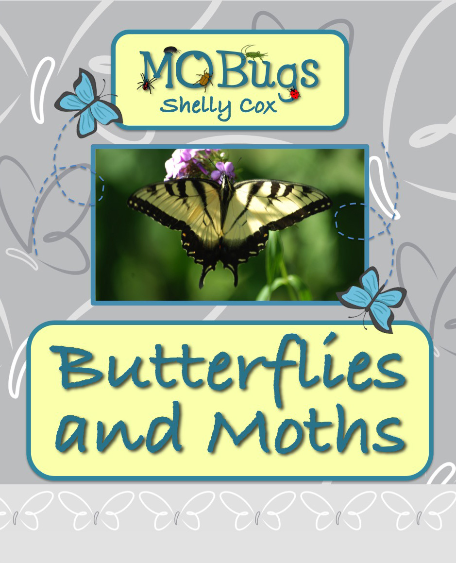 MObugs--Butterflies and Moths
