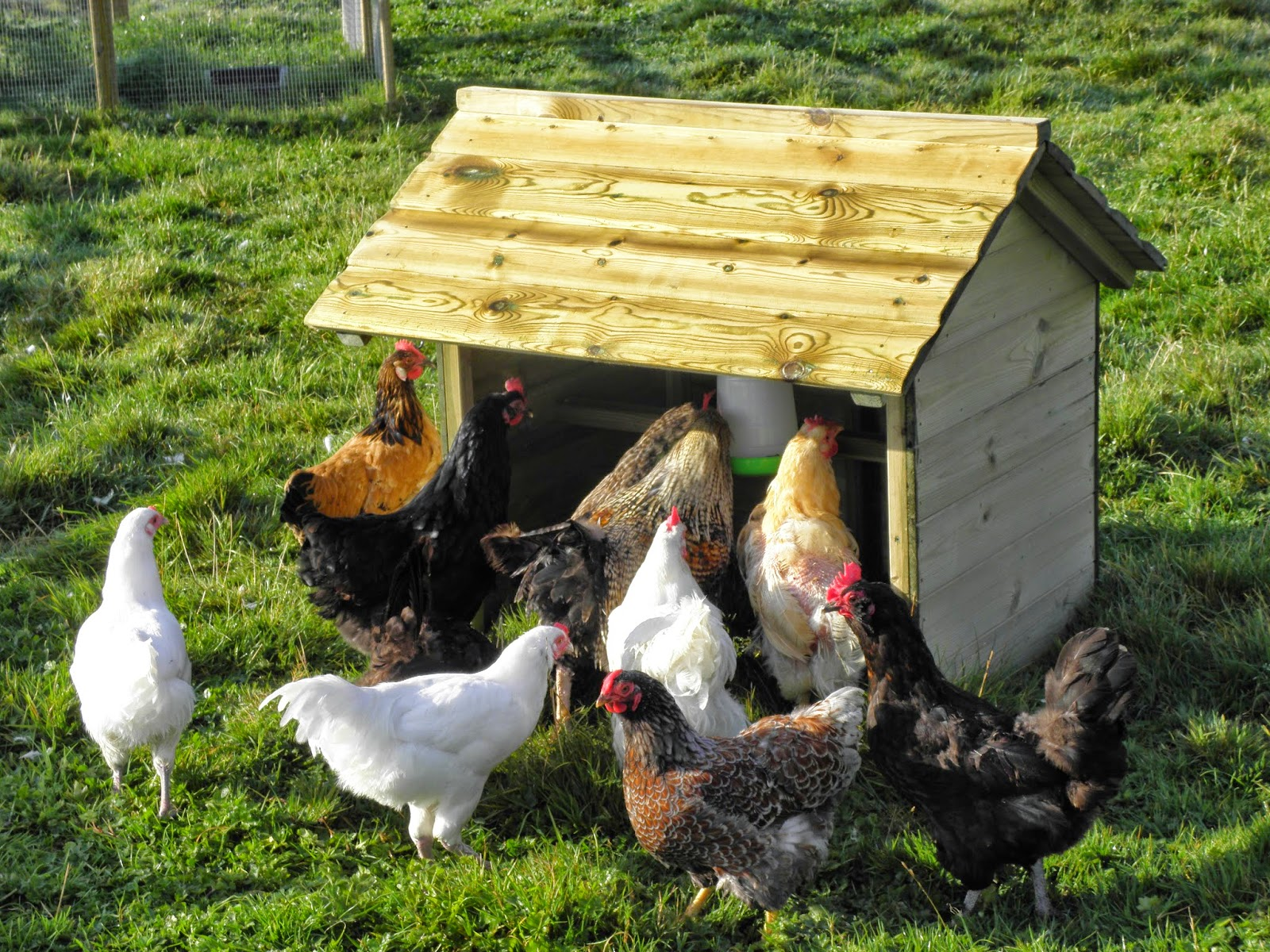 Shelter for Poultry from the Rain
