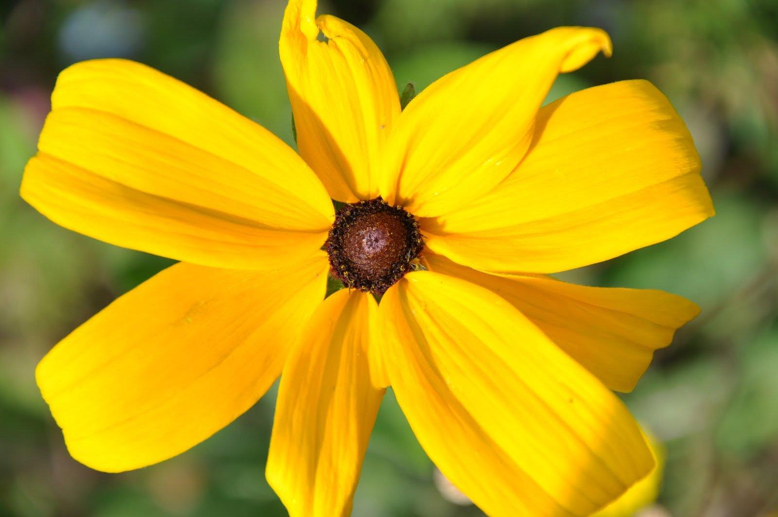 Le tocard photos de fleurs gratuites et libres de droit for Fleurs en gros