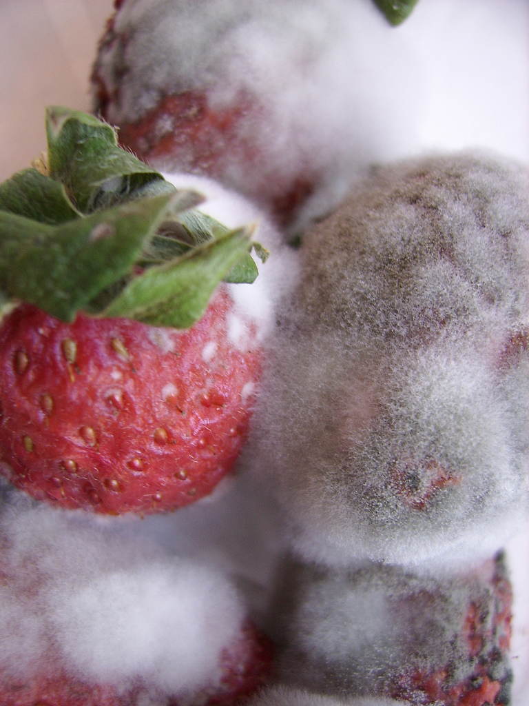 DR. REBECCA'S HEALTHY PLANET: Mold - A Culture Inside Your ...