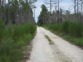 Chassahowitzka National Wildlife Refuge
