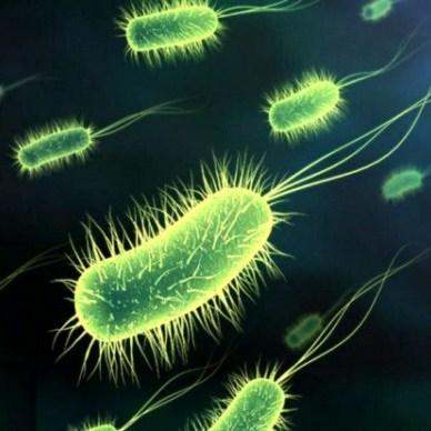 enfermedades causadas por las bacterias: