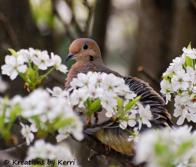 Remembering Last Spring