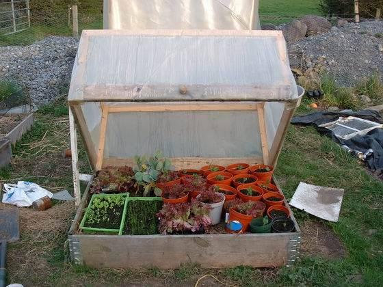 Como hacer un invernadero casero aprender hacer for Como realizar un vivero