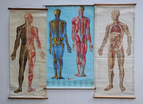 Vintage Retro Antique Furniture Vintage Anatomical Posters