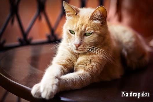 Problem z kulami włosowymi u kotów