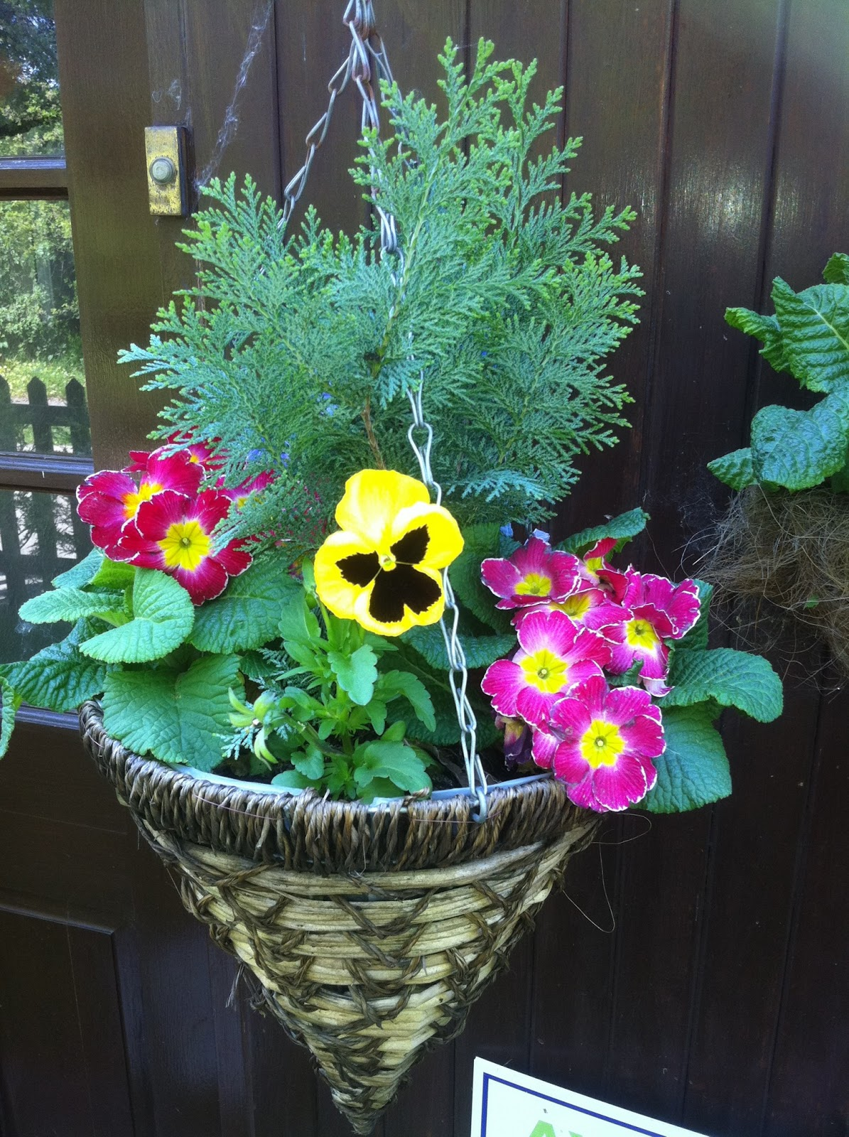 Hanging Flower Baskets Winter : A guide to planting great looking hanging baskets
