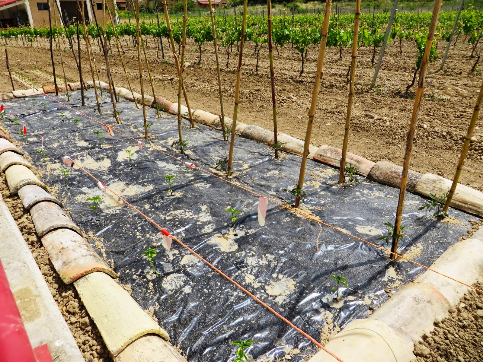 Diseo Huerto Ecologico Diseo Huerto Ecologico Cargando Zoom  ~ Como Cultivar Tomates En El Huerto