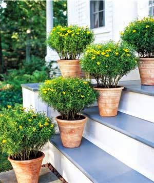 Before heading to the nursery study the area you ve designated for your container garden—is it sunny shady —and then find plants that will flourish in