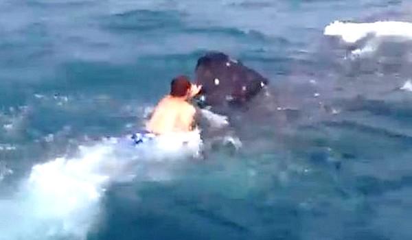 Montó a un tiburón y sobrevivió