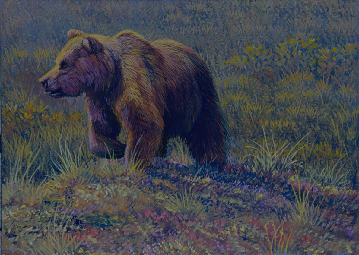 Grizzly Bear Painting Another bear painting.