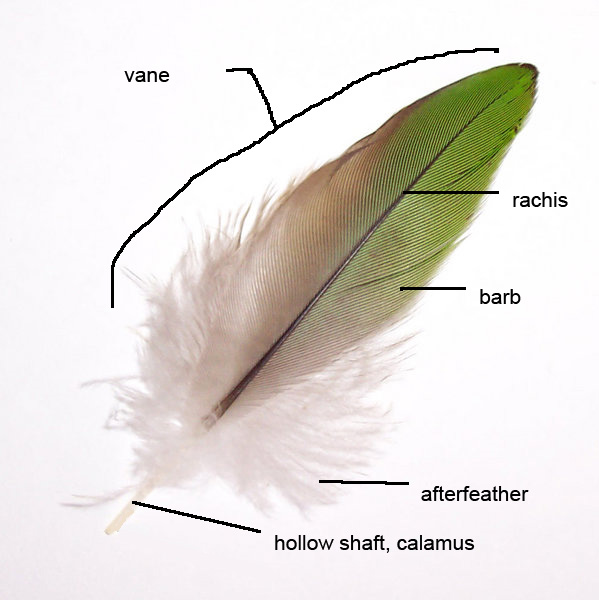 Different bird feathers - photo#11